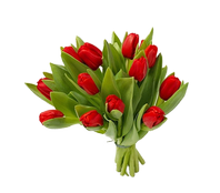 Букет из 13 тюльпанов, Bouquet of 13 tulips