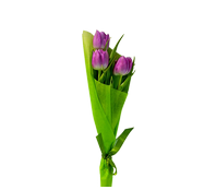 Букет из 3 тюльпанов, Bouquet of 3 tulips