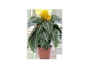 Купить комнатные цветы в ярославле