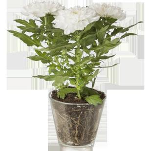 Купить цветы в горшках ярославль купить искусственные цветы в интерне